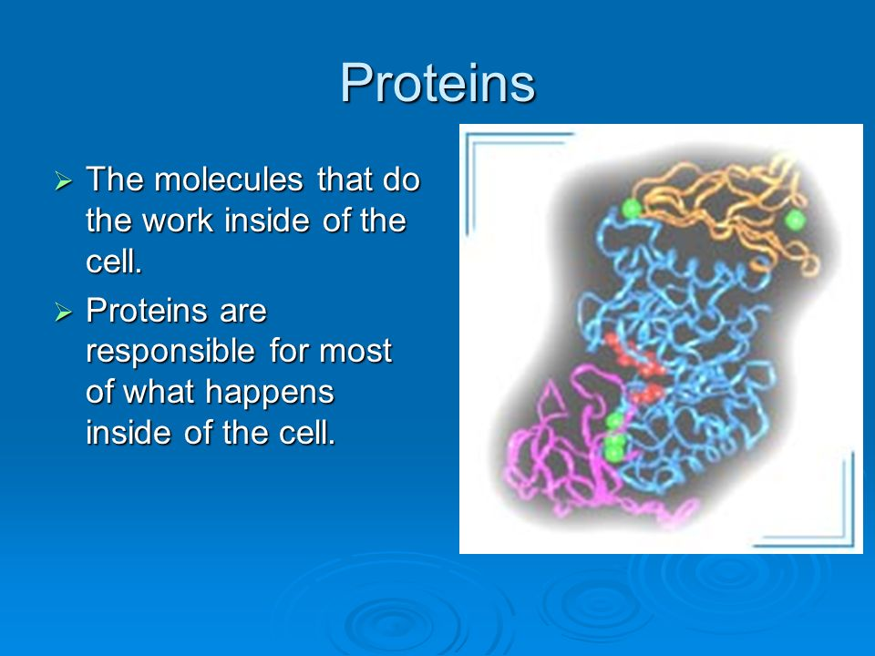 Proteins The molecules that do the work inside of the cell.