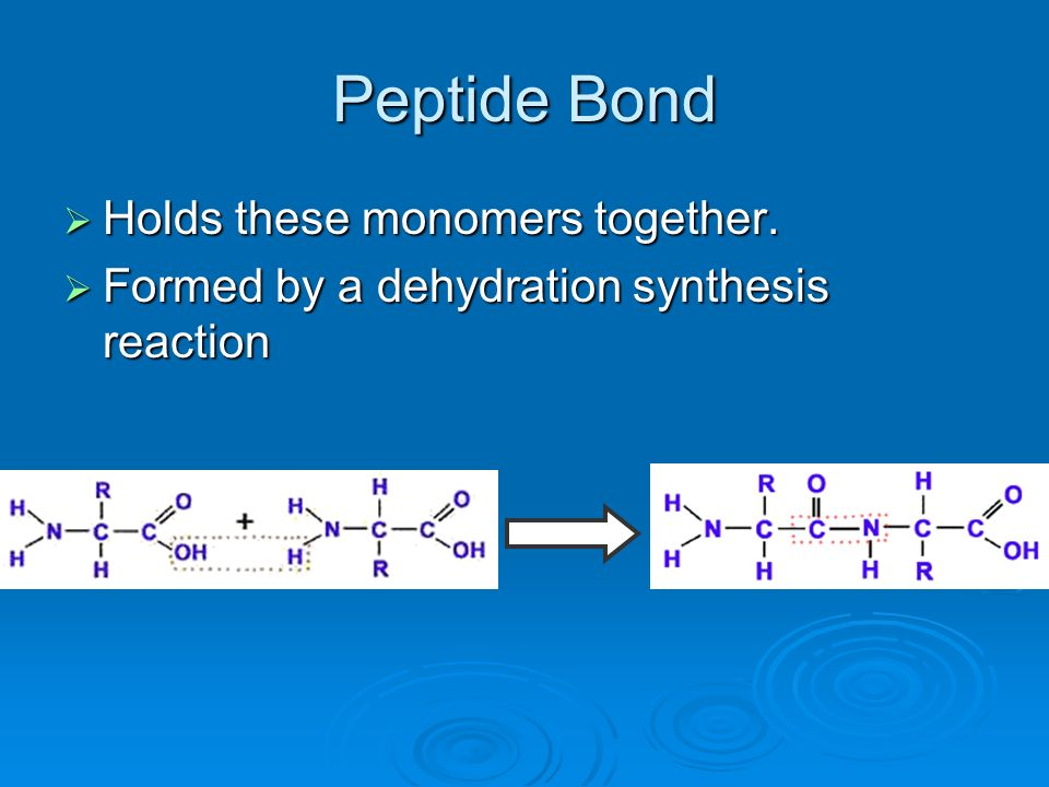 Peptide Bond Holds these monomers together.