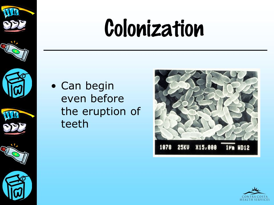 Colonization Can begin even before the eruption of teeth