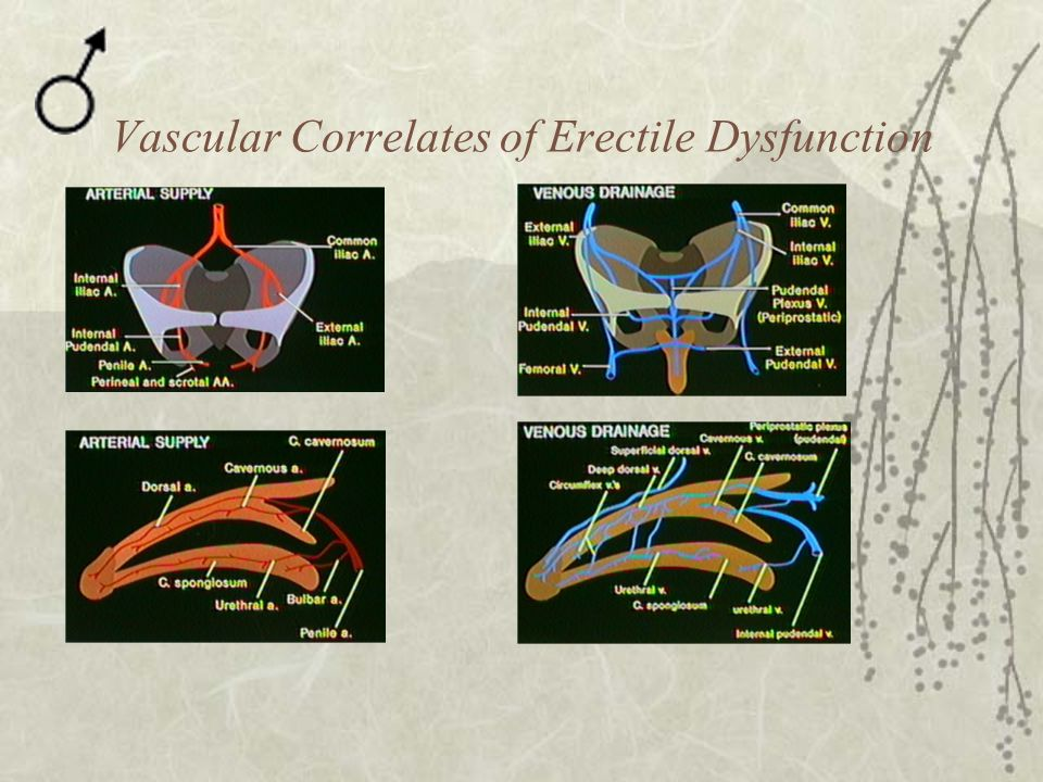 Vascular Correlates of Erectile Dysfunction