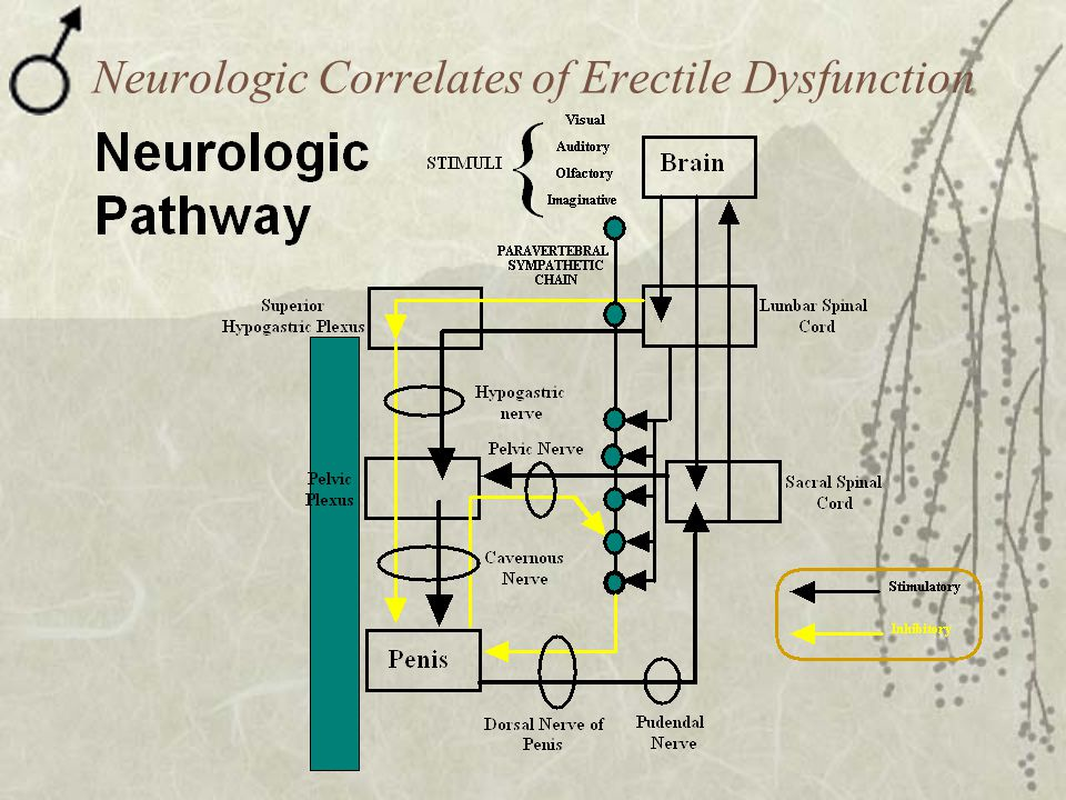 Neurologic Correlates of Erectile Dysfunction