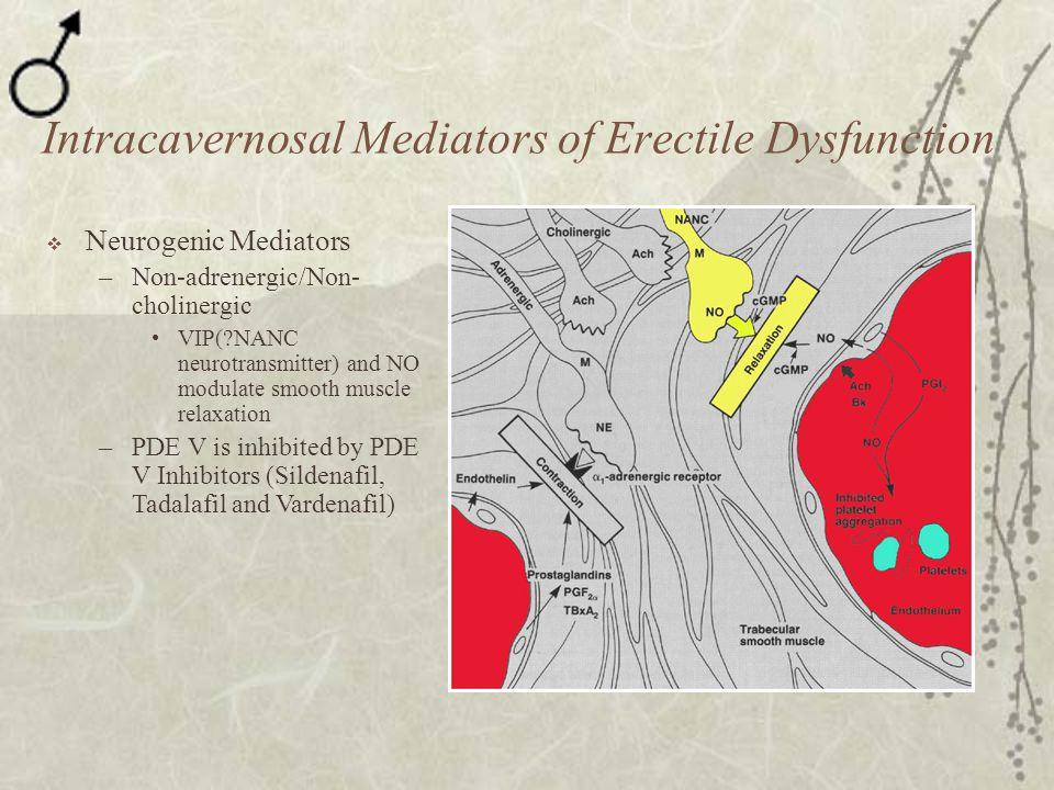 Intracavernosal Mediators of Erectile Dysfunction