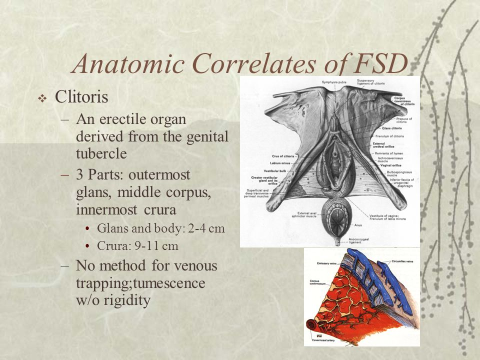 Anatomic Correlates of FSD