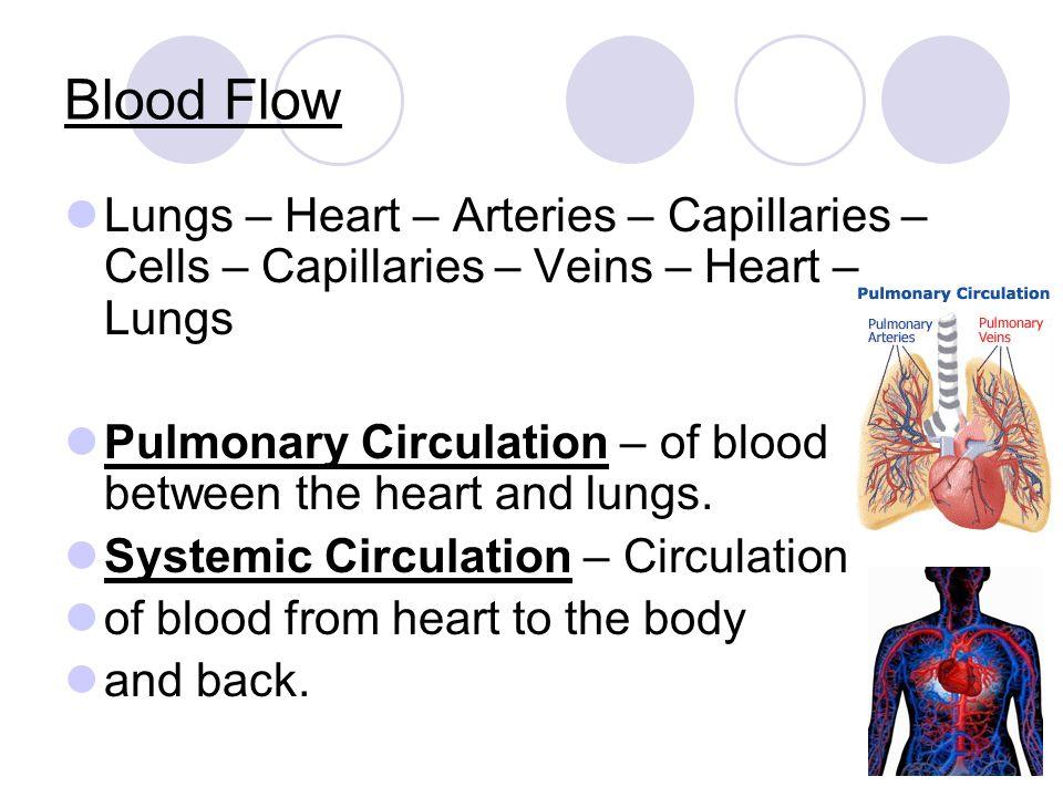Blood Flow Lungs – Heart – Arteries – Capillaries – Cells – Capillaries – Veins – Heart – Lungs.