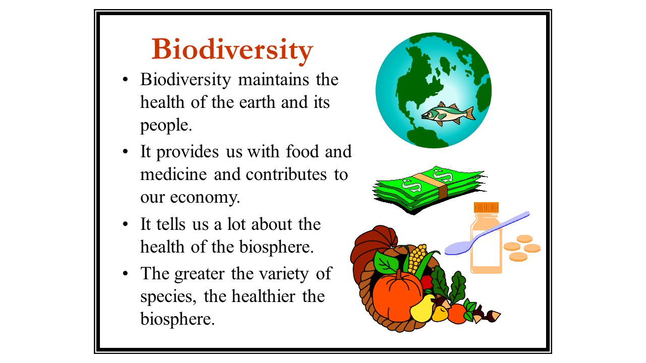 Biodiversity Biodiversity maintains the health of the earth and its people. It provides us with food and medicine and contributes to our economy.