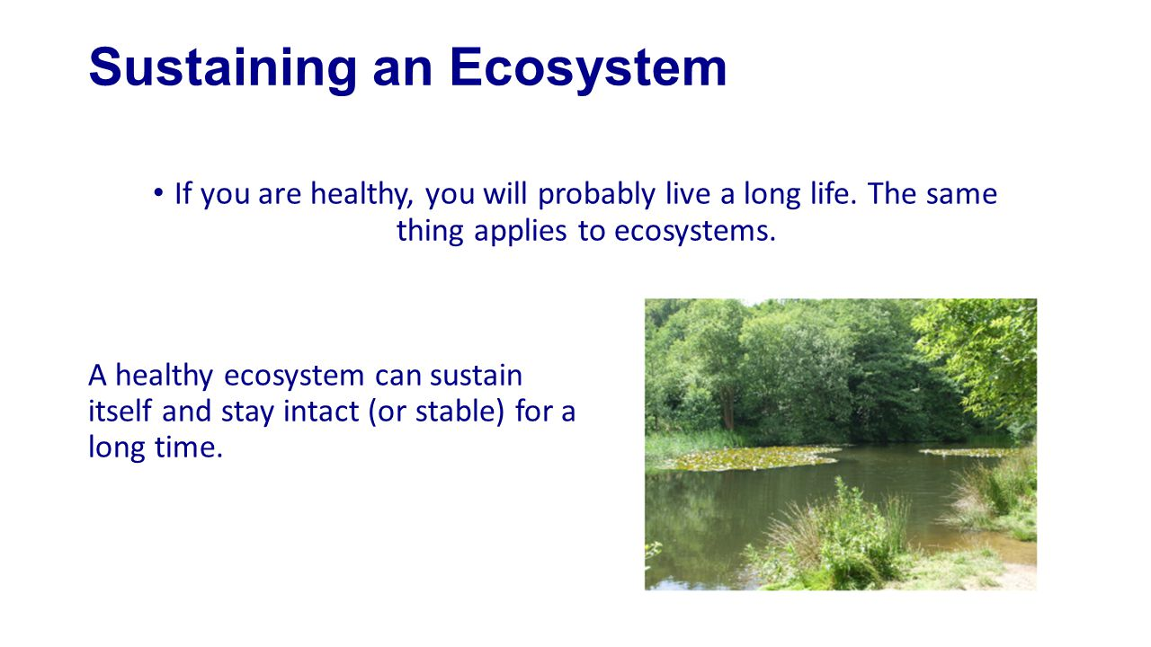 Sustaining an Ecosystem