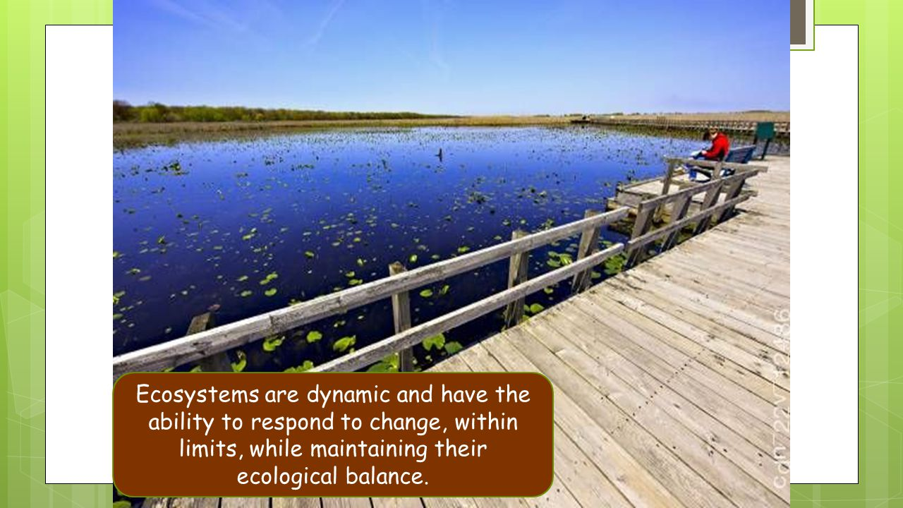 Ecosystems are dynamic and have the ability to respond to change, within limits, while maintaining their ecological balance.