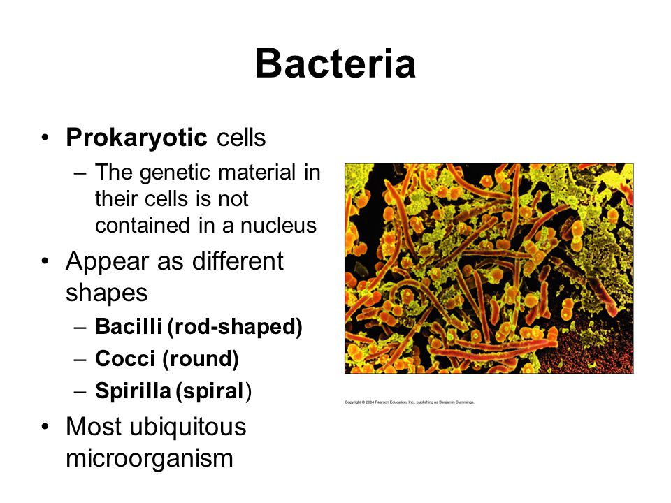 Bacteria Prokaryotic cells Appear as different shapes