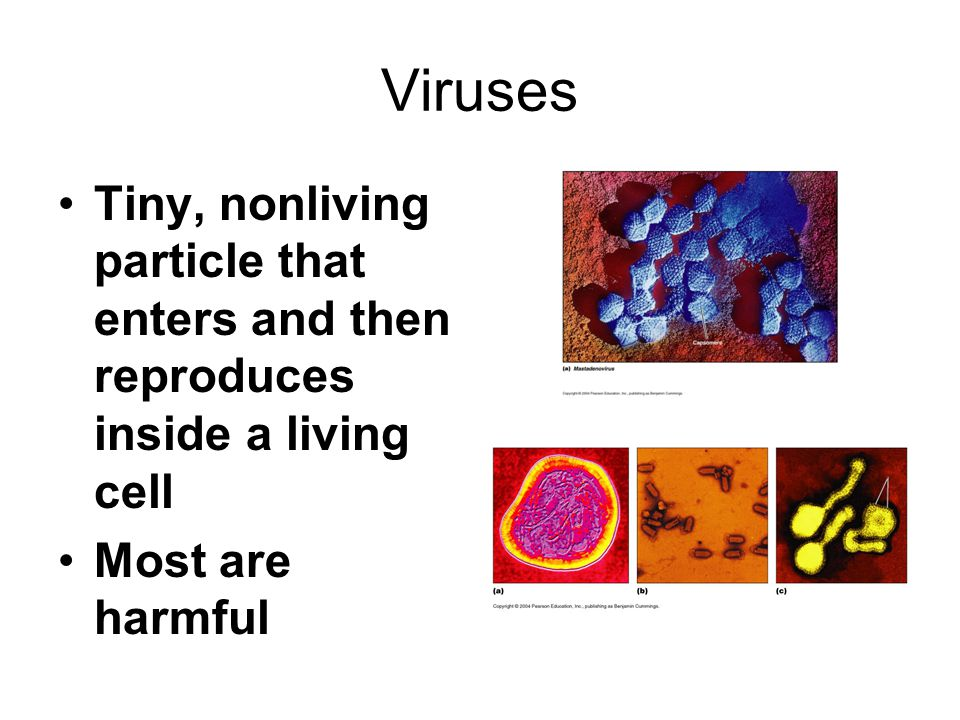 Viruses Tiny, nonliving particle that enters and then reproduces inside a living cell.