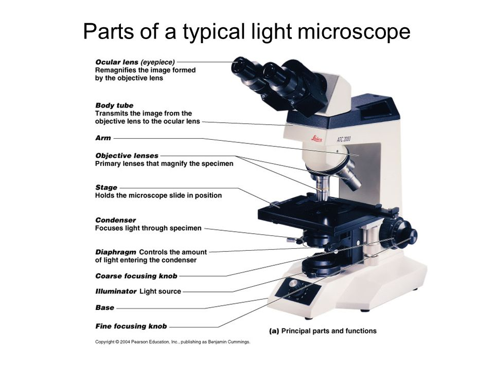 Parts of a typical light microscope