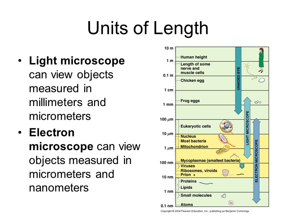 Units of Length Light microscope can view objects measured in millimeters and micrometers.