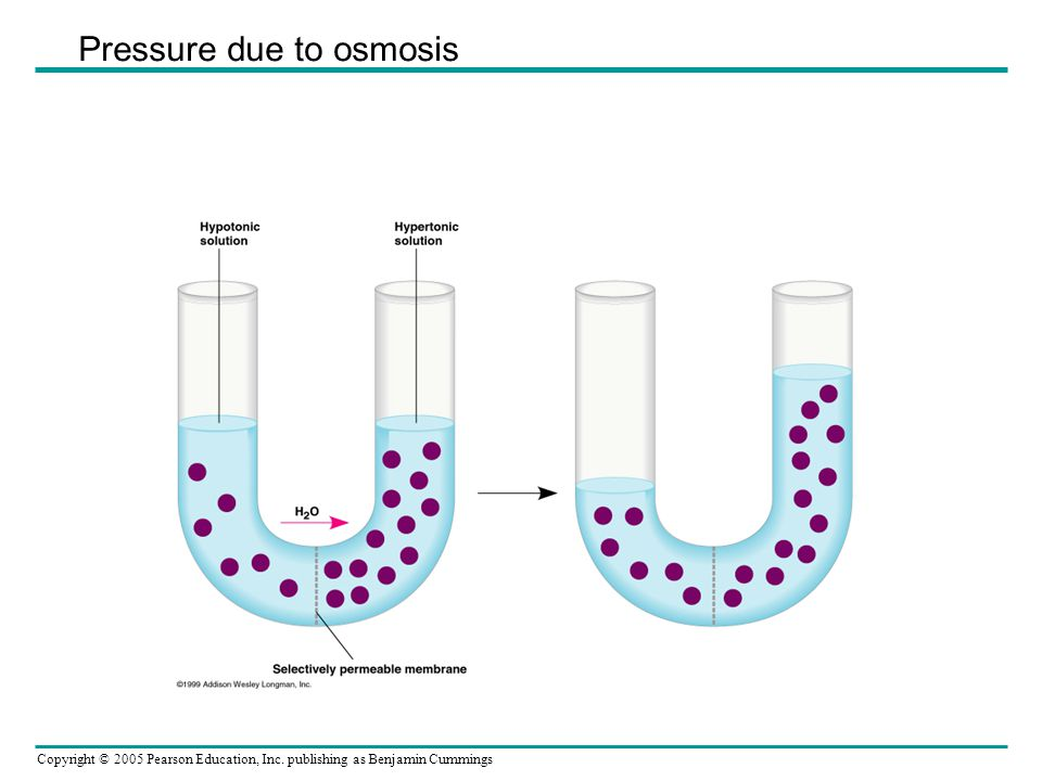 Pressure due to osmosis