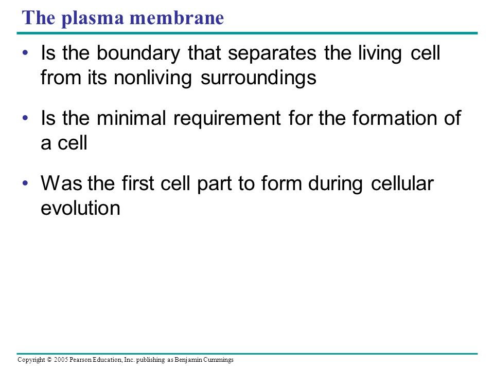 The plasma membrane Is the boundary that separates the living cell from its nonliving surroundings.