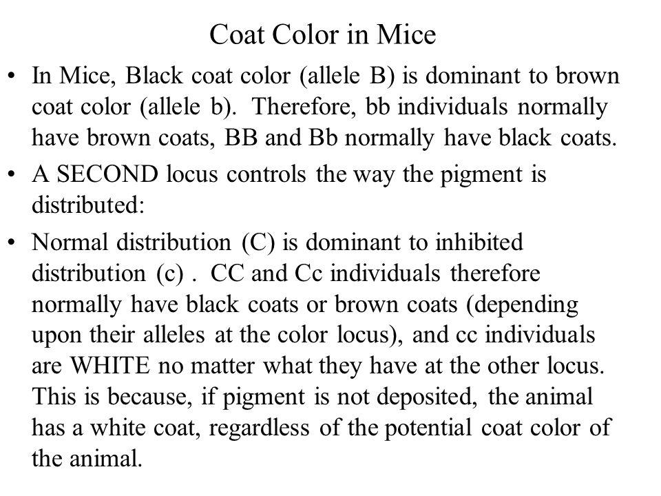 Coat Color in Mice