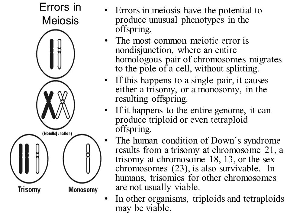 Errors in Meiosis Errors in meiosis have the potential to produce unusual phenotypes in the offspring.