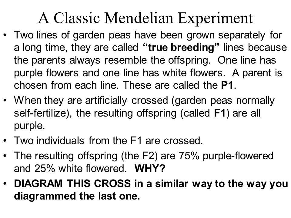 A Classic Mendelian Experiment