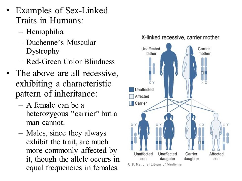 Examples of Sex-Linked Traits in Humans: