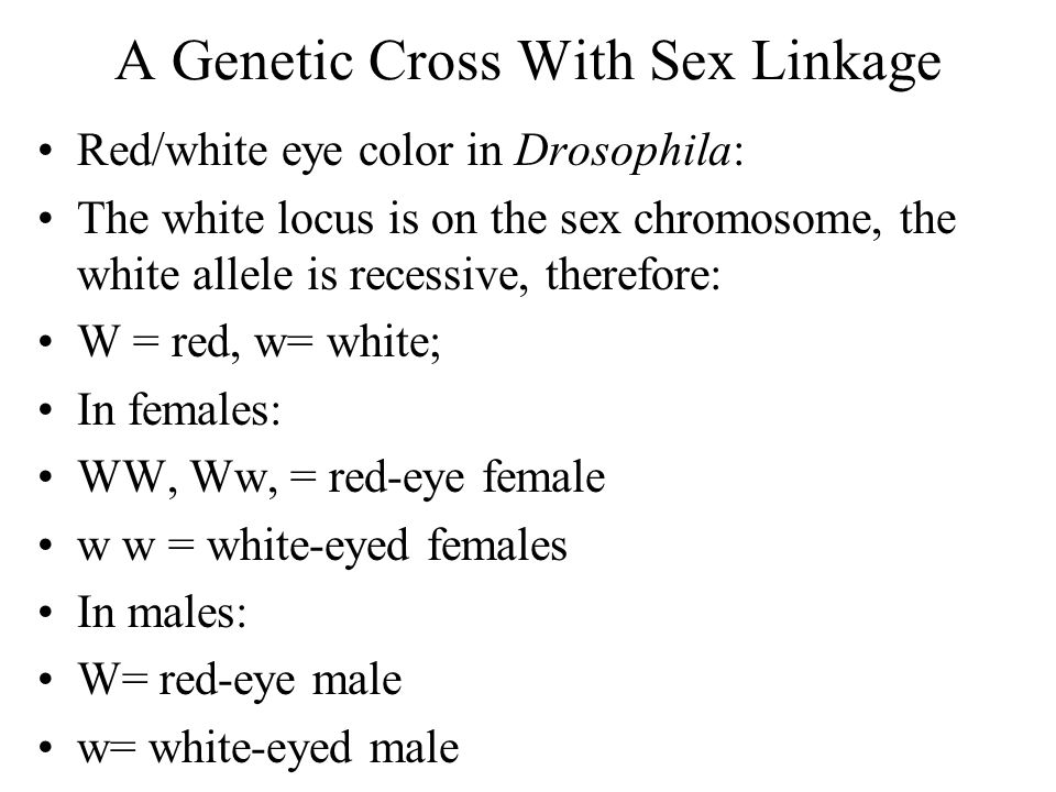 A Genetic Cross With Sex Linkage