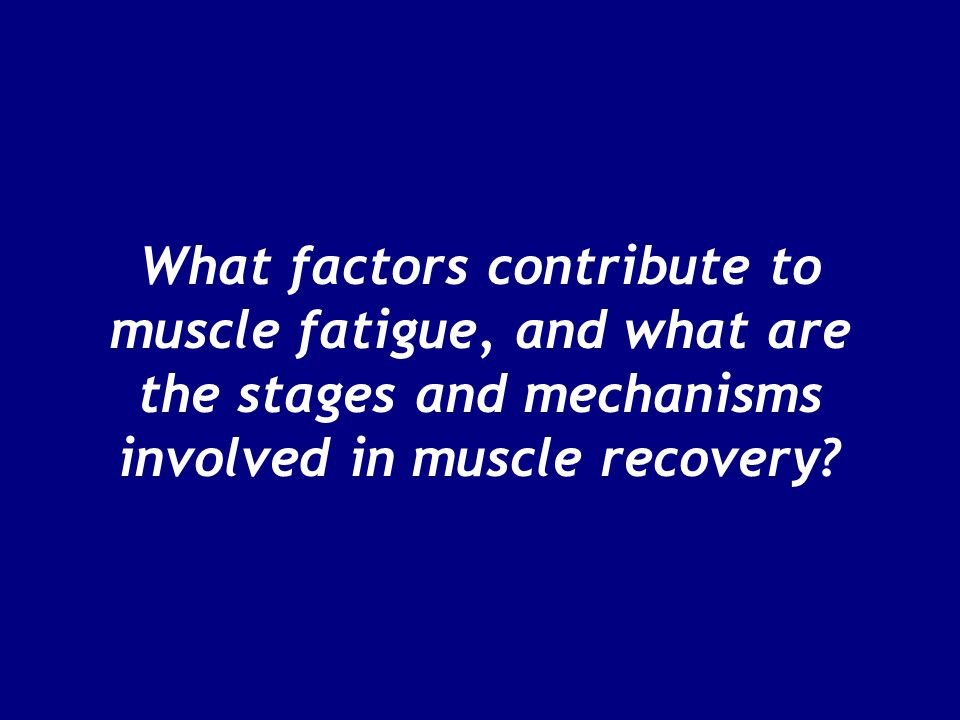 What factors contribute to muscle fatigue, and what are the stages and mechanisms involved in muscle recovery