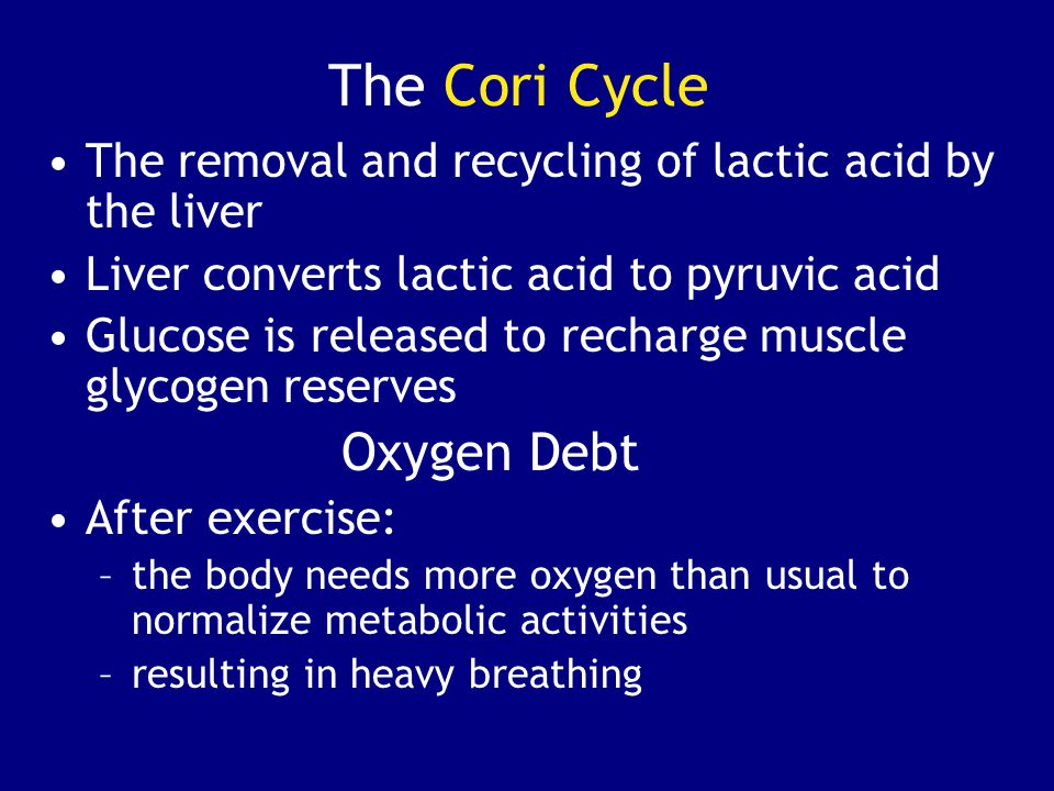The Cori Cycle The removal and recycling of lactic acid by the liver