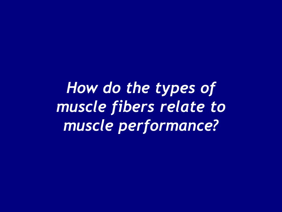 How do the types of muscle fibers relate to muscle performance