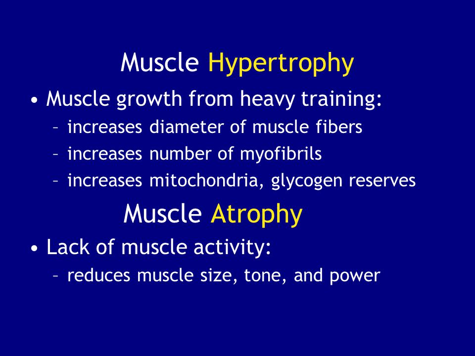 Muscle Hypertrophy Muscle Atrophy Muscle growth from heavy training: