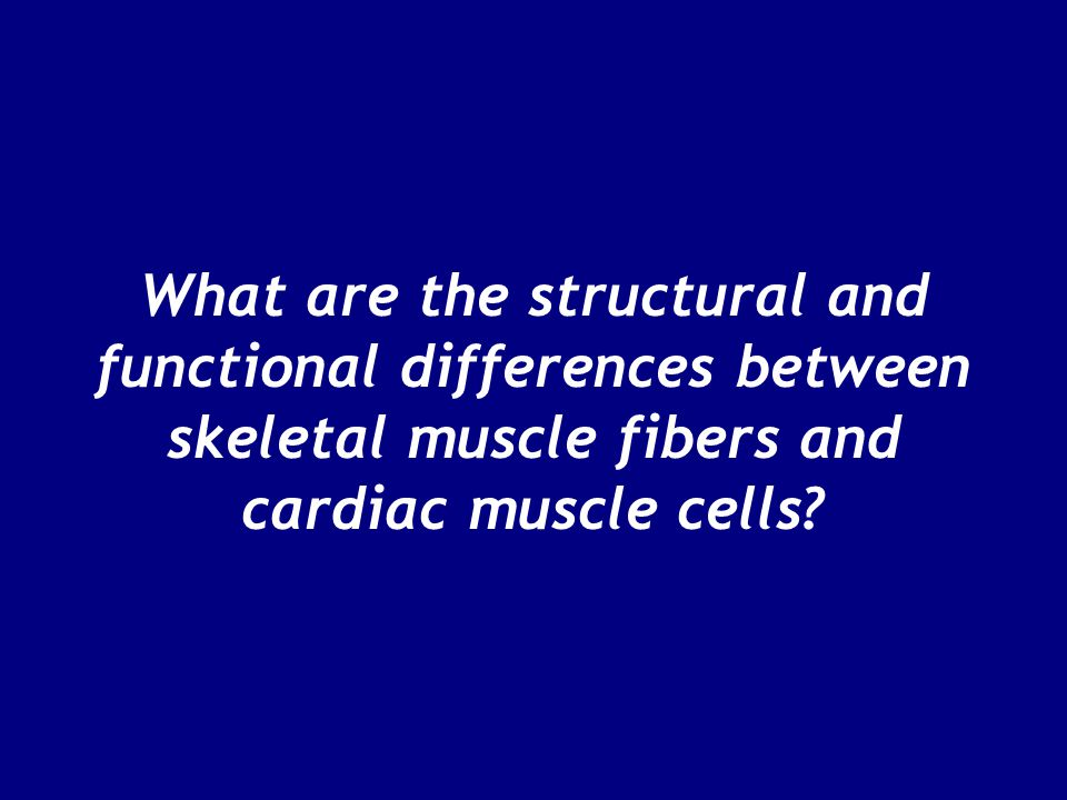 What are the structural and functional differences between skeletal muscle fibers and cardiac muscle cells