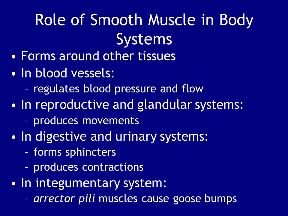 Role of Smooth Muscle in Body Systems