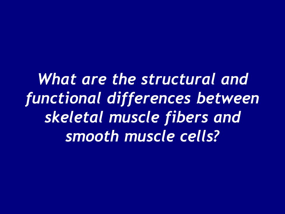 What are the structural and functional differences between skeletal muscle fibers and smooth muscle cells