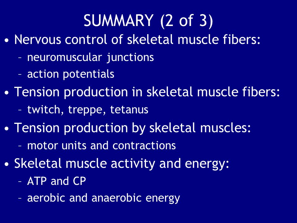 SUMMARY (2 of 3) Nervous control of skeletal muscle fibers: