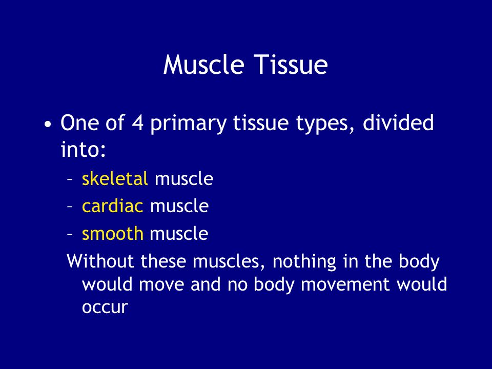 Muscle Tissue One of 4 primary tissue types, divided into: