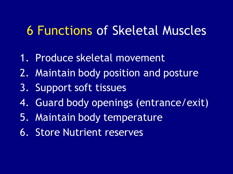 6 Functions of Skeletal Muscles