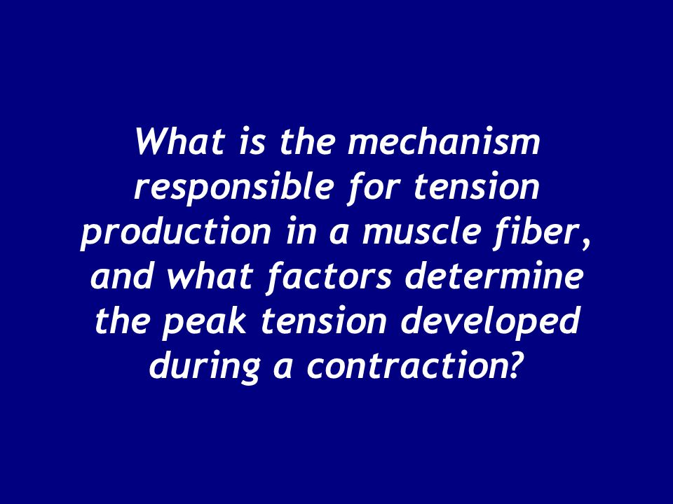 What is the mechanism responsible for tension production in a muscle fiber, and what factors determine the peak tension developed during a contraction