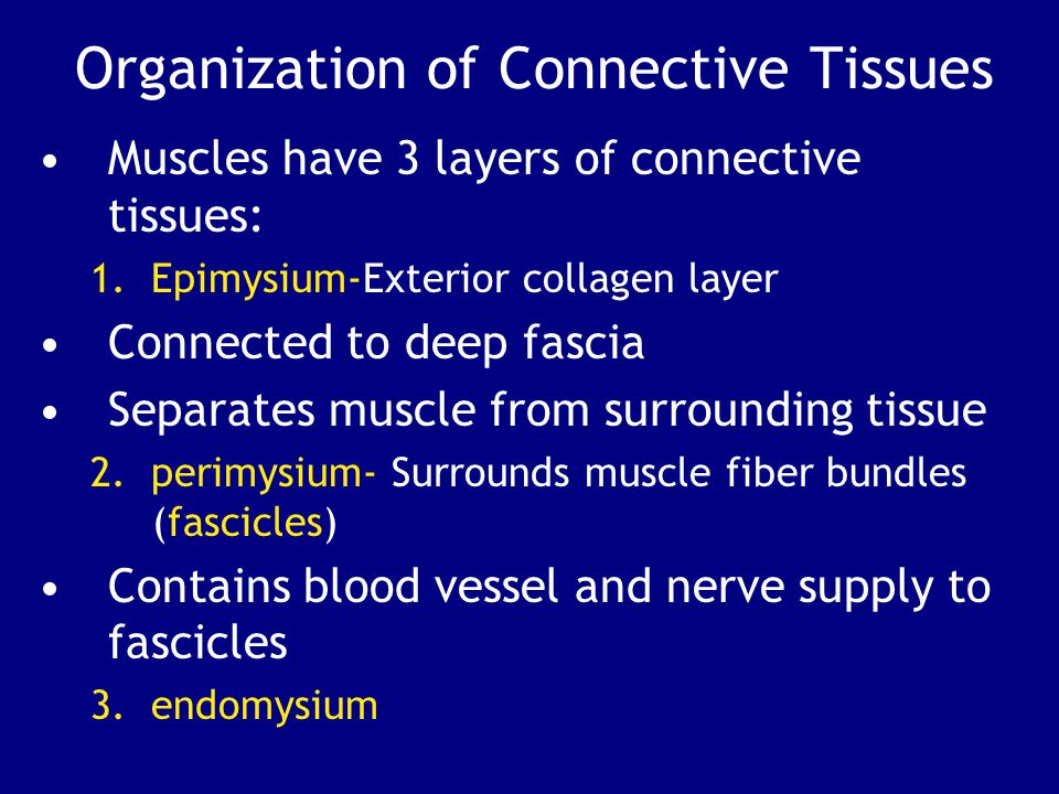 Organization of Connective Tissues