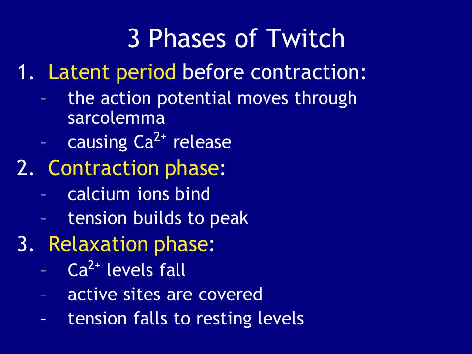 3 Phases of Twitch Latent period before contraction: