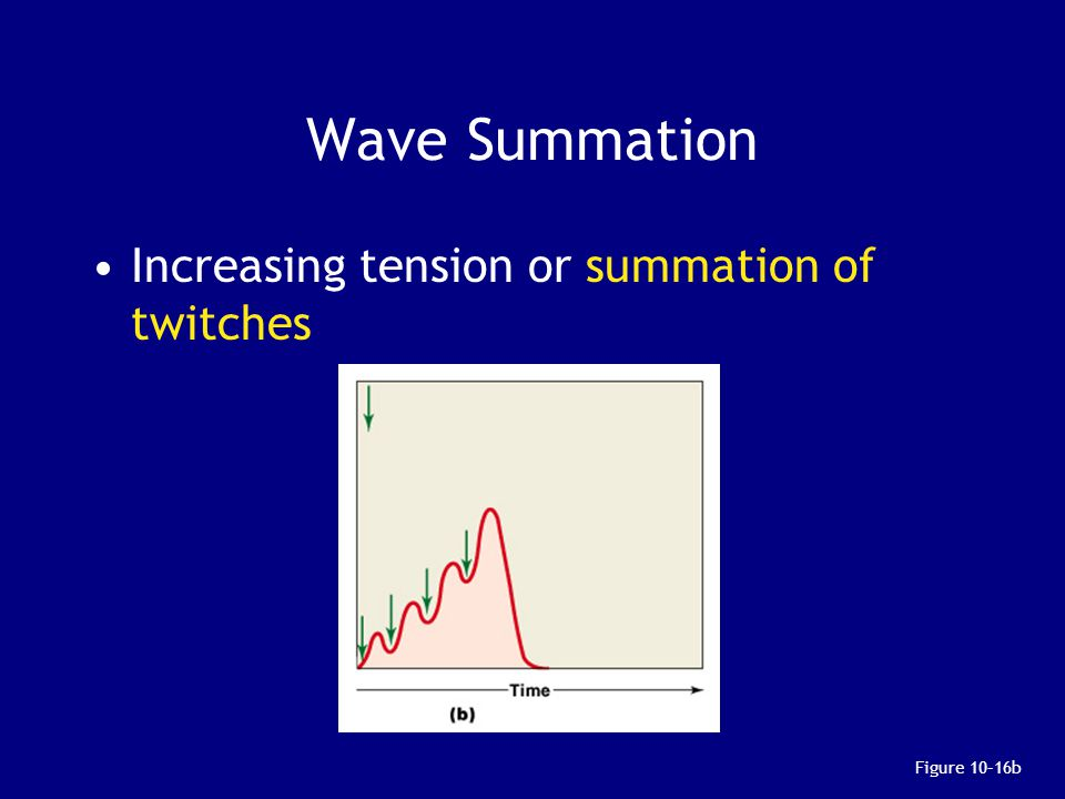 Wave Summation Increasing tension or summation of twitches