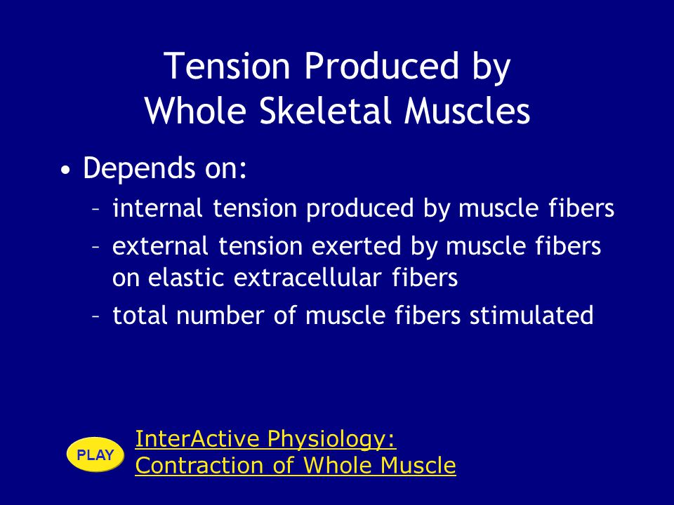 Tension Produced by Whole Skeletal Muscles