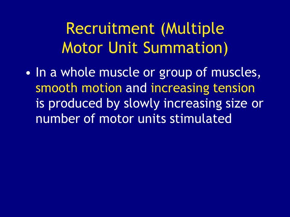 Recruitment (Multiple Motor Unit Summation)