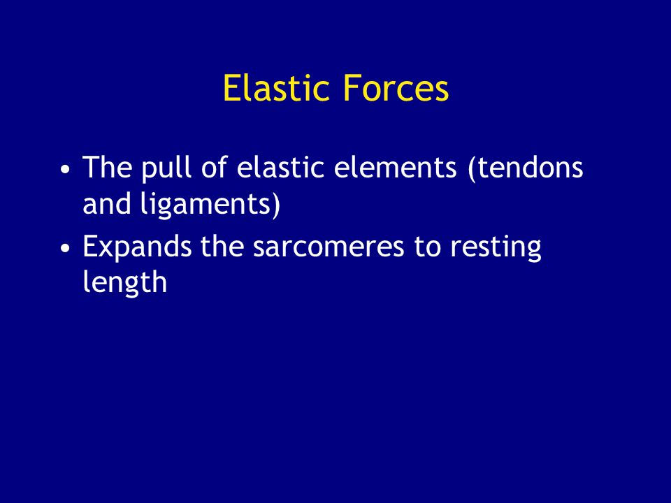Elastic Forces The pull of elastic elements (tendons and ligaments)