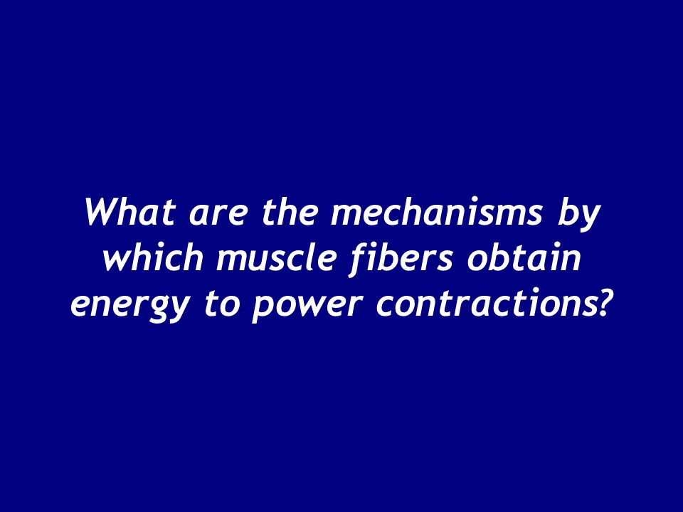 What are the mechanisms by which muscle fibers obtain energy to power contractions