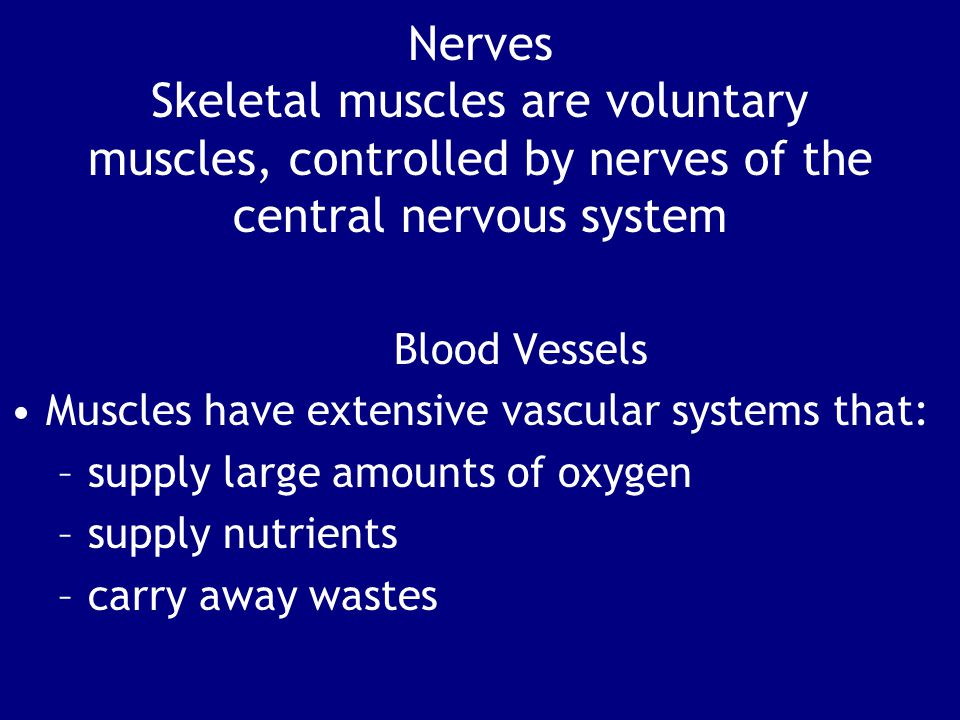 Nerves Skeletal muscles are voluntary muscles, controlled by nerves of the central nervous system