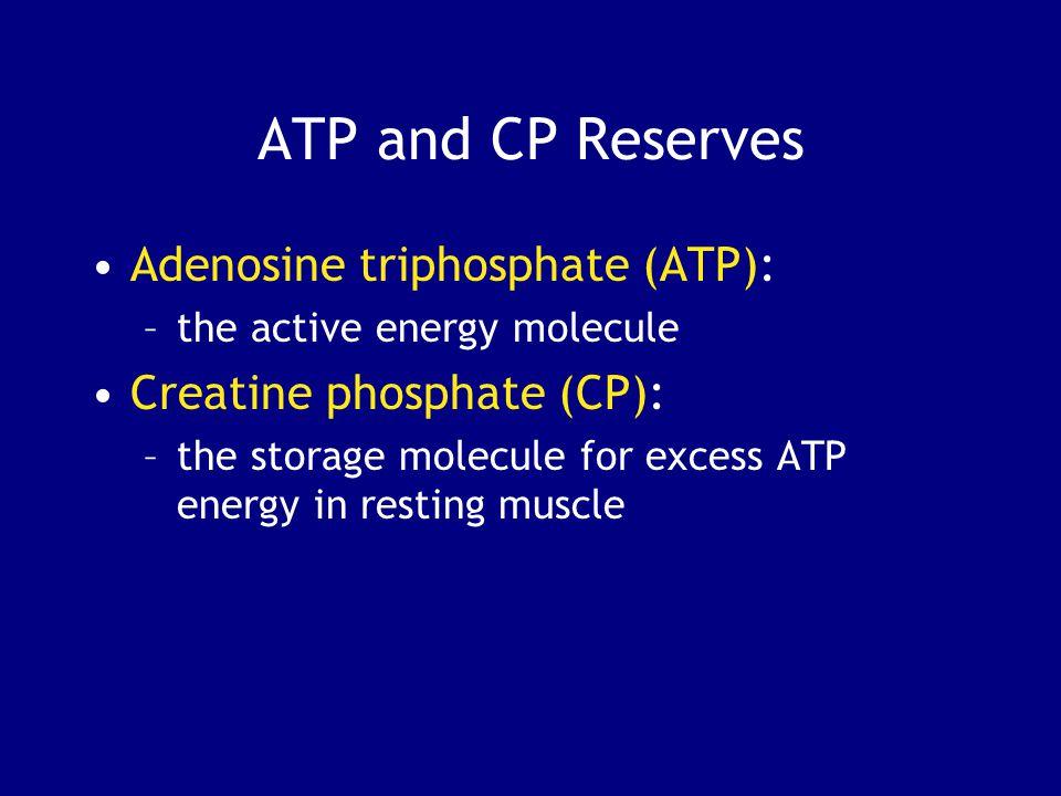 ATP and CP Reserves Adenosine triphosphate (ATP):