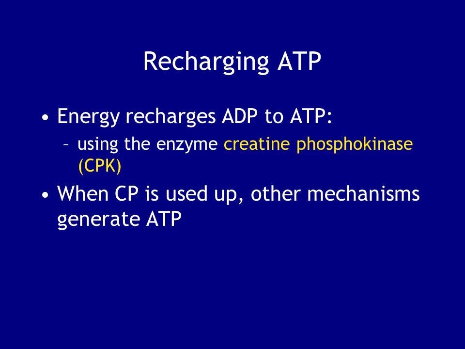 Recharging ATP Energy recharges ADP to ATP: