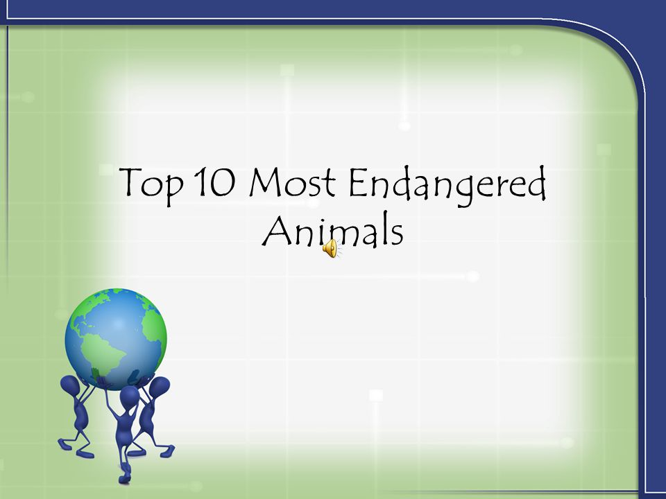 Top 10 Most Endangered Animals