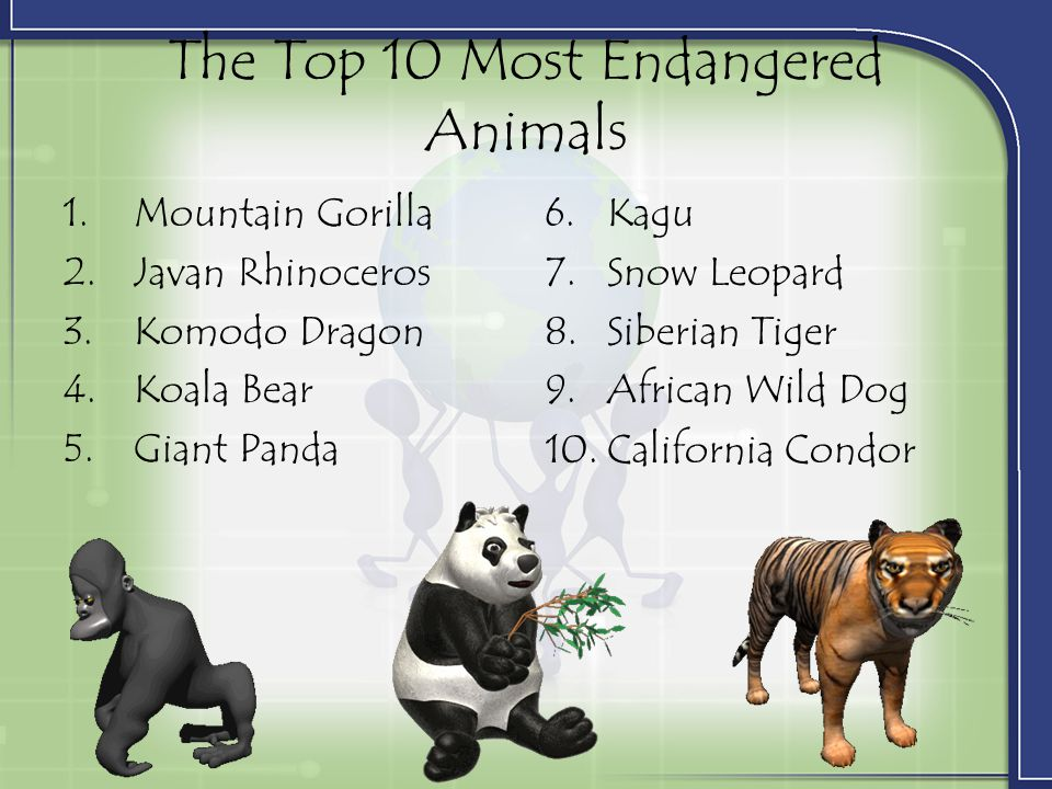 The Top 10 Most Endangered Animals