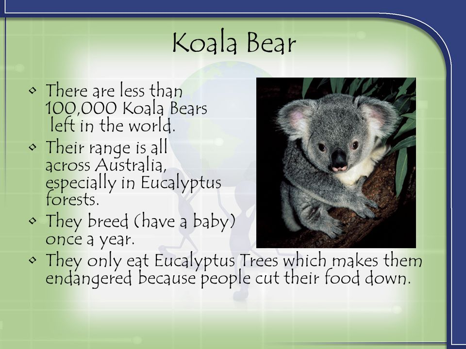Koala Bear There are less than 100,000 Koala Bears left in the world.