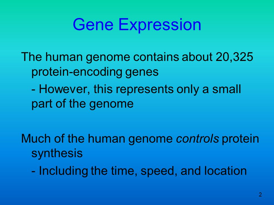 Gene Expression The human genome contains about 20,325 protein-encoding genes. - However, this represents only a small part of the genome.