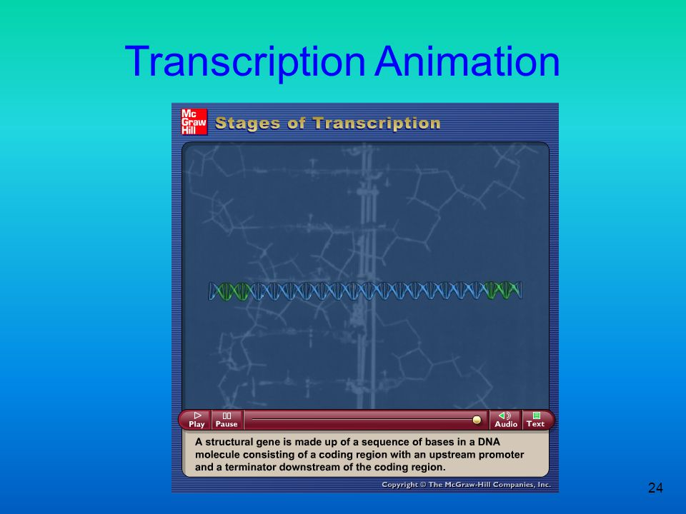 Transcription Animation