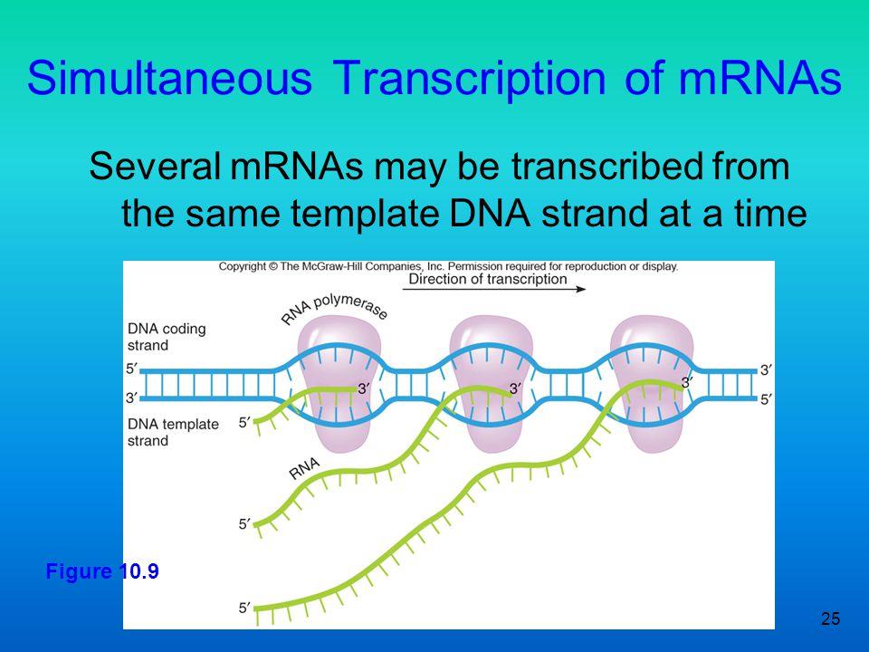 Simultaneous Transcription of mRNAs
