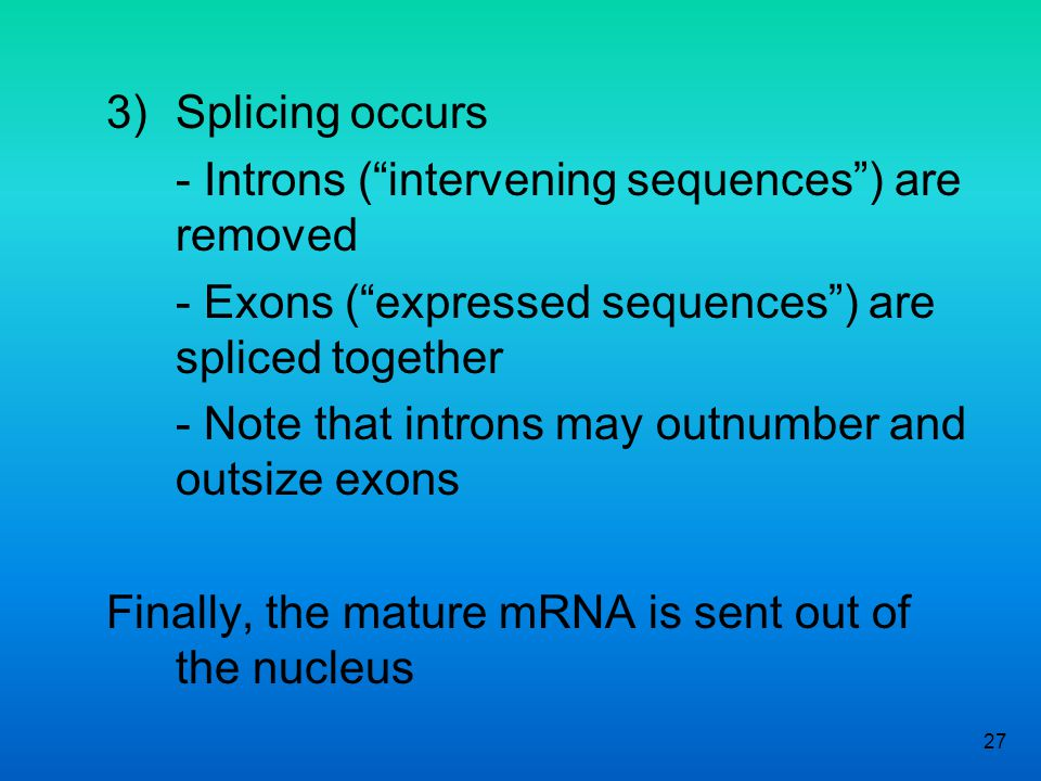 - Introns ( intervening sequences ) are removed